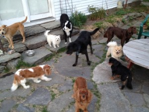 terrace dogs 5-10-15