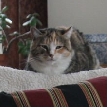 Jan 8, 2011  Zen