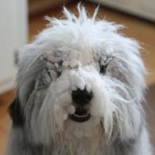 Snowy Annie