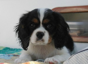 Gio puppy